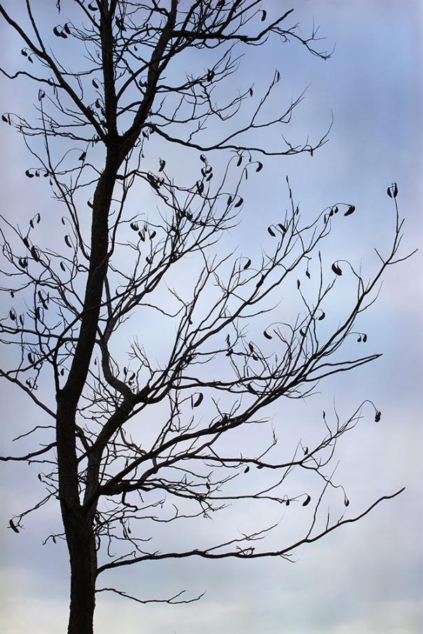Tree_15-0328_3900-2b