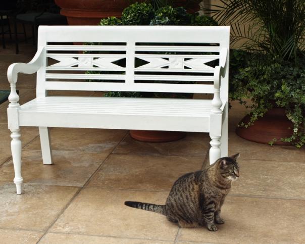 Tabby Cat_12-0519_9423s